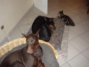 chien et chat ensemble, cohabitation chien et chat, entente chien et chat