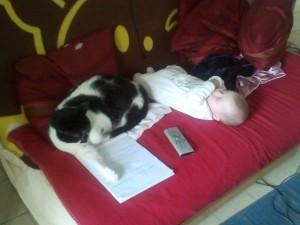 chat et nouveau né, chat et bébé, arrivée d'un enfant avec un chat, maladie chat femme enceinte