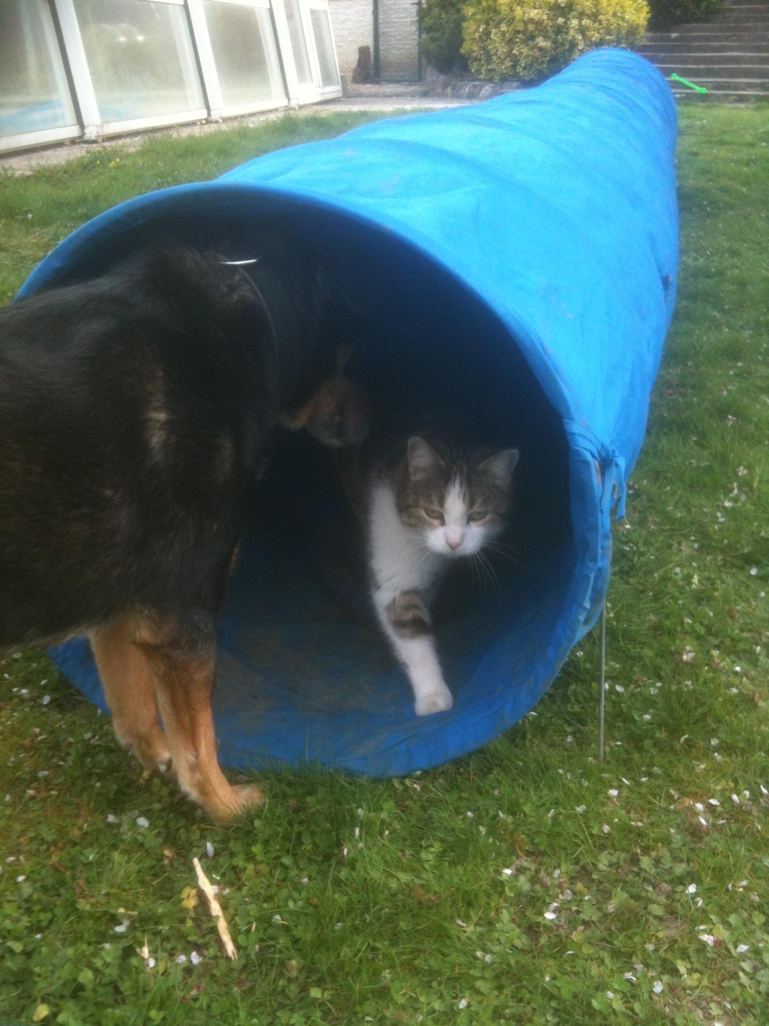 Tina chienne adoptée au refuge de l'ava à l'âge de 11 ans 1/2 en présence de mon chat Bidule
